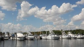Marina in Coral Gables, Florida stock footage