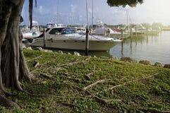 Marina de Miami Photographie stock libre de droits
