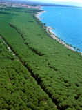 Marina Di Cecina - widok z lotu ptaka pinewood morze i plaże obraz royalty free