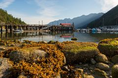 Marina at Horseshoe Bay during Low Tide in Vancouver BC Canada Royalty Free Stock Photo