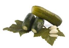 Marina il cucumbe Immagine Stock