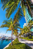 Marina in Miami Florida. View of the marina in Miami Florida Royalty Free Stock Photo