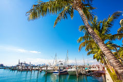 Marina in Miami Florida. View of the marina in Miami Florida Royalty Free Stock Photography