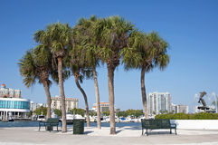 Marina overview. Green metal benches with palm trees and buildings, at the Sarasota Marina, Sarasota, FL Stock Photo