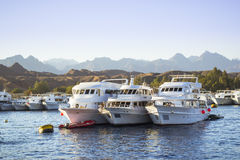 Marina: Pleasure sightseeing boats on the Parking lot of boat Stock Images