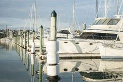 Marina. Westhaven Marina full of moored luxury boats in Auckland, New Zealand Royalty Free Stock Photo