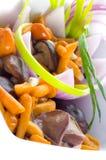 Marinaded mushrooms Stock Image