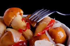 Marinated белые грибы Стоковое Фото