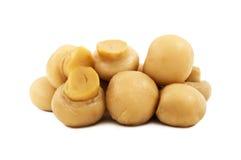 Marinated изолированные champignons Стоковые Фотографии RF