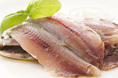 Marinated Anchovies Royalty Free Stock Images