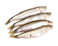 Marinated anchovies isolate on a white background Stock Photos
