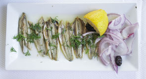 Marinated anchovies on a white plate. Stock Photos