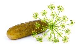 Marinated cucumber Stock Photography