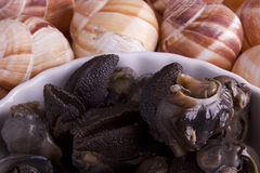 Marinated escargot Royalty Free Stock Images