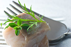 Marinated fish. Marinated Herring with herb on a fork Royalty Free Stock Images