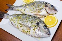 Marinated gilthead fishes Stock Photos