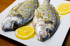 Marinated gilthead fishes Stock Images