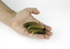 Marinated gravade gurkor i hand på en vit bakgrund Arkivfoton