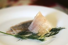 Salted herring with a dill royalty free stock photography