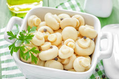 Marinated mushrooms Stock Images
