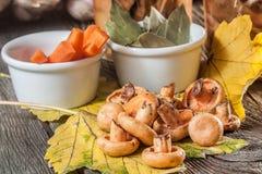Marinated mushrooms. Stock Image