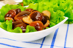 Marinated mushrooms with lettuce. Marinated mushrooms with lettuce leaves Stock Images