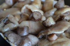 Marinated mushrooms Stock Photography