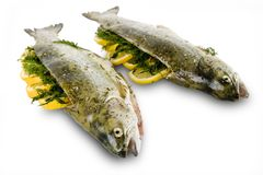 Marinated Rainbow trout. Lemon, dill and herbs Royalty Free Stock Images