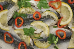Marinated sardine fish Royalty Free Stock Image