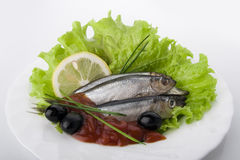 Marinated sprat. With vegetables on the plate Stock Photos