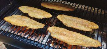 Marinated tilapia fillets on grill Royalty Free Stock Photo
