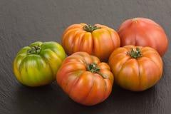 Marinda tomatoes Stock Images