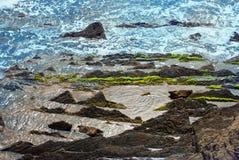 Marine algae on the rocks Royalty Free Stock Images