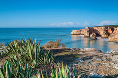 Marine aloe cactus on a background of a sea landscape. Portugal. Royalty Free Stock Photos