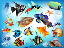 Marine animals. A set of marine animals, fish, jellyfish, shells, starfish, in different variants Royalty Free Stock Photos