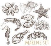 Marine Animals Collection Illustration Libre de Droits