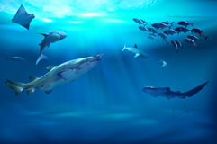 Marine animals. 3D illustration Royalty Free Stock Image