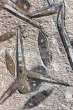 Marine Animals fossilisée en dalle fossile Image stock