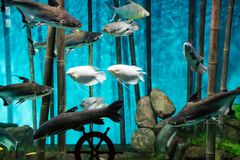 The fishes. The marine animals and other inhabitants of the seas and oceans Stock Images