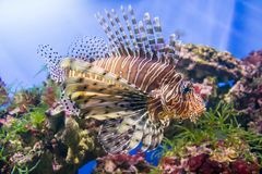 The marine life. The marine animals and other inhabitants of the seas and oceans Stock Photography