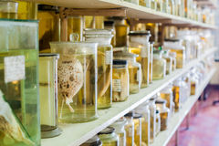 Marine animals preserved alcohol in glass tubes Stock Image