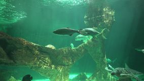 Marine Animals And Sea Life stock video