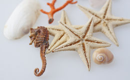 Marine animals Stock Photography