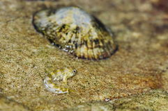 Marine animals Stock Photography