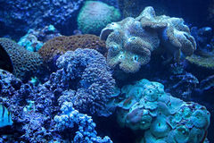 Marine Aquarium Photographie stock