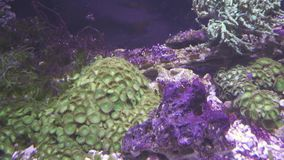 Marine aquarium corals reef stock footage video stock video