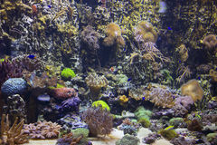 Marine aquarium with corals Royalty Free Stock Images