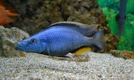 Marine for aquarium fish. Aquatic royalty free stock photography