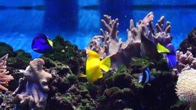 Marine Aquarium, fish. Marine Aquarium in Moscow zoo, Russia stock video