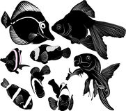 Marine aquarium fish. Nemo goldfish Royalty Free Stock Photo